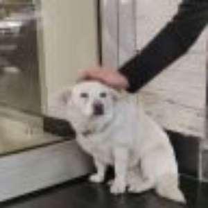 A cachorrinha fiel que esperou por dias na porta do hospital até seu dono ter alta