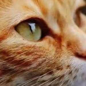 No Dia Mundial do Gato, assista aos vídeos mais ...