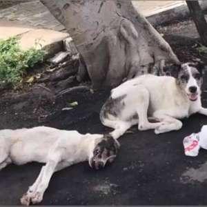 Cão foi atropelado no Ceará e amigo cuidou dele até o ...