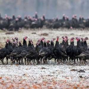 Rússia detecta 7 casos de gripe aviária e notifica OMS