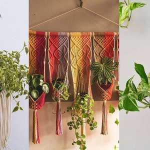 Hangers: saiba quais as plantas ideais para serem ...