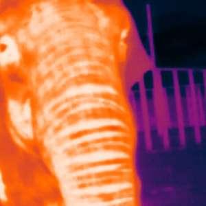 Zoo aposta em 'álbum' com 30 mil fotos para ajudar na ...