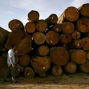 MPF vai apurar venda ilegal de terras na Amazônia via ...