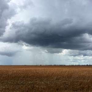 Colheita de soja do Brasil avança para 15% da área, mas ...
