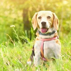 Adestrar cachorro - pesquisa revela que perfil dos donos ...