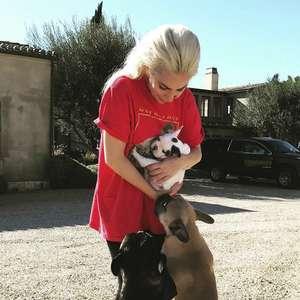 Lady Gaga recupera os cachorros roubados