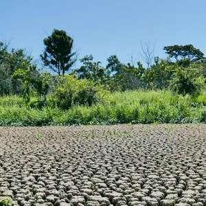 Sem chuva, Pantanal teme nova catástrofe ambiental