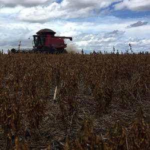Com atraso, colheita de soja em MT avança ao último terço