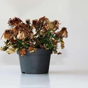 Entenda a relação entre as plantas murchas e energia ...