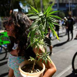 Estado de Nova York autoriza uso recreativo de maconha