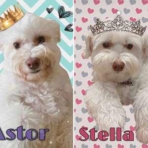 Conheça Astor e Stella, 'filhos' fofos de Bonner e Natasha