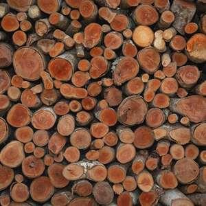 Indústria madeireira: como a alta umidade do ar pode se ...