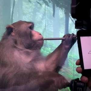 Com chip no cérebro, macaco da Neuralink joga Pong com o ...