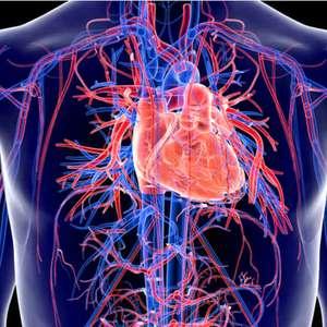 Covid-19 também pode prejudicar o sistema cardiovascular