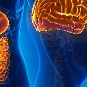 De acordo com especialista, intestino equivale a segundo ...