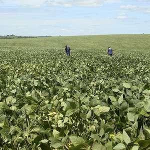 Colheita de soja ultrapassa metade da área no RS; Emater ...