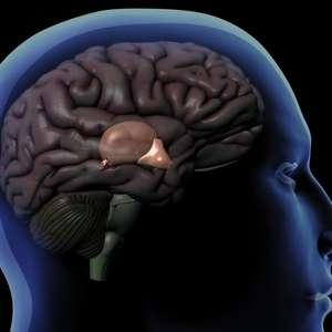 Como funciona a glândula pineal, o órgão enigmático que ...