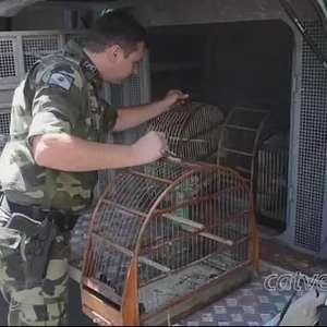 Polícia Ambiental apreende pássaros nativos e exóticos em Toledo