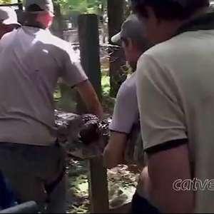 Força-tarefa é montada para tratar jacaré que engoliu barra de ferro no Zoo
