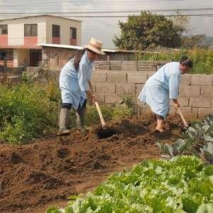 Projeto de agricultura urbana ajuda refugiados da Venezuela