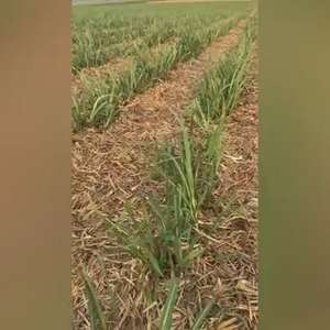 Agricultura conservacionista - por Xico Graziano