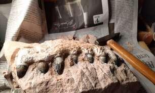 Obra em rodovia descobre fósseis de dinossauros de 90 milhões de anos no interior de SP
