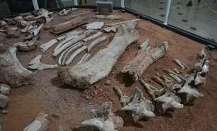 SP: Fósseis no interior são de espécie inédita de dinossauro