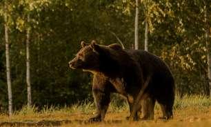 Príncipe é acusado de matar o 'maior urso vivo da Europa'