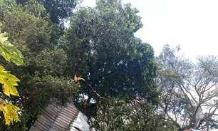 Chuva e ventos fortes provocam destruição em área rural de MS