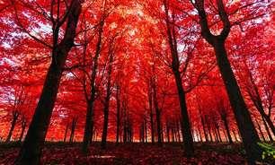 Uma árvore faz barulho ao cair se ninguém estiver lá para escutar? A resposta da ciência e da filosofia