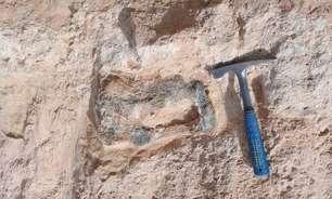 Novo achado de fóssil sugere 'cemitério de dinossauros' no interior de São Paulo