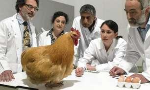 Cientistas dizem ter descoberto a 'fórmula matemática da forma dos ovos'