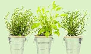 5 plantas que atraem proteção: saiba quais são para ter em seu lar