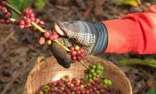 Setor cafeeiro eleva produção com mecanização da lavoura