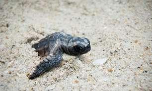 Soluções sustentáveis vão transformar Aruba em ilha verde