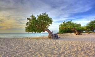Eagle Beach tem árvore típica de Aruba e ótimos restaurantes