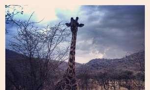 Conheça o Serengeti, destino mais relacionado no Instagram