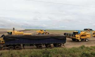 Rabobank eleva safra de soja do Brasil a 136 mi t; reduz estimativa para milho