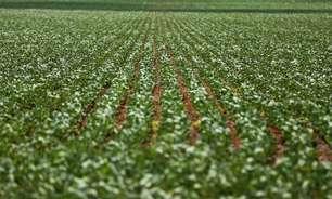 Safra de grãos deve superar pela primeira vez 270 milhões de toneladas