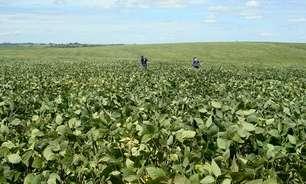 Colheita de soja do RS atinge 87%; produtores aumentam foco nas safras de inverno