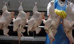 Arábia Saudita suspende vendas de carne de aves da JBS e mais 2 companhias do Brasil