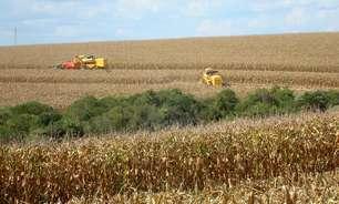 Qualidade da 2ª safra de milho do Paraná piora; chuva traz algum alívio, diz Deral