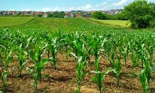 Governo aprova ações para o estímulo ao plantio de milho