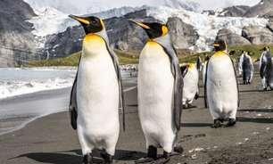 O que é Linux? [Guia para iniciantes]
