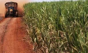 Conab vê queda de 4,6% na safra de cana do centro-sul; produção de açúcar cai 6,4%
