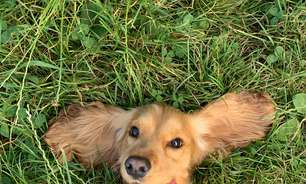 5 dicas para aliviar o stress dos cães