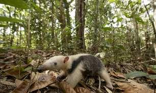 Mudanças climáticas e queda na biodiversidade devem ser combatidas juntas, apontam pesquisadores