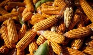 BRF vê preço do milho em novo patamar mais alto diante da forte demanda, diz CEO