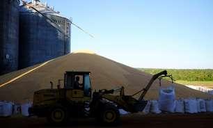 Com atraso, colheita de milho em MT atinge 4% das áreas; trabalhos começam no algodão