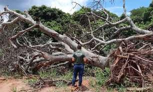 Desmatamento avança no Cerrado e faz crescer risco de apagão elétrico no Brasil
